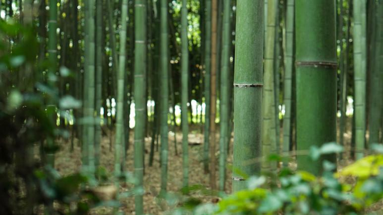 Uma das funções do caule é a condução de nutrientes, o que permite uma ligação entre folhas e raízes
