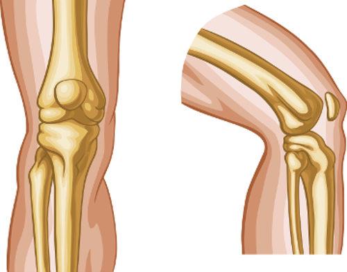 Uma das funções das articulações é permitir a movimentação de segmentos do corpo