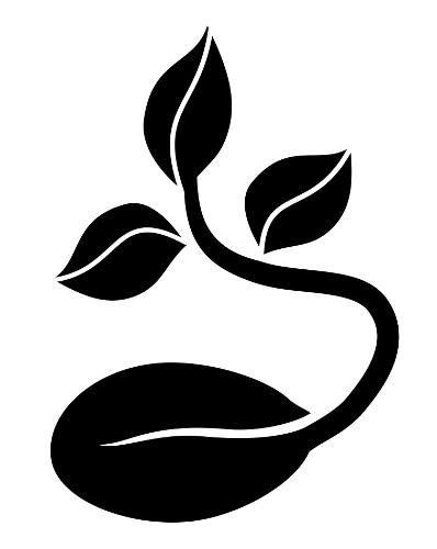 Uma das funções da giberelina é atuar na germinação de sementes