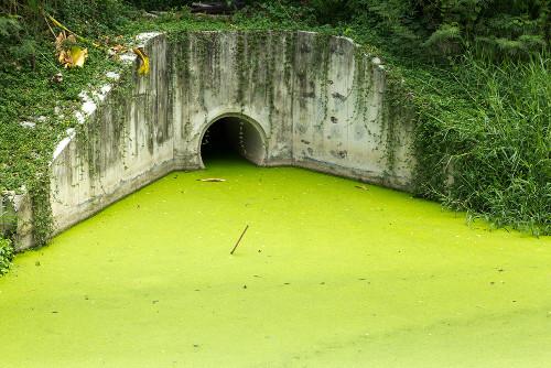Uma grande quantidade de nutrientes na água, como o fósforo, pode causar eutrofização